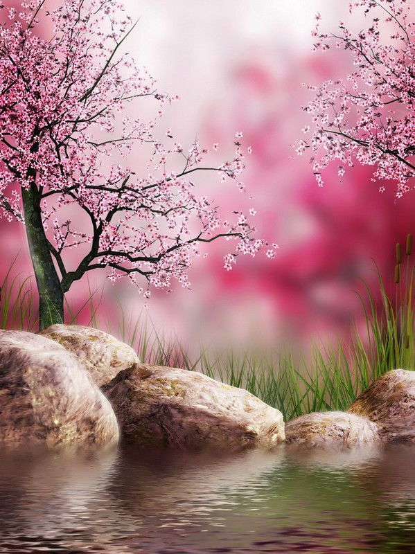 Zen nature une belle image amiti s - Image zen nature ...